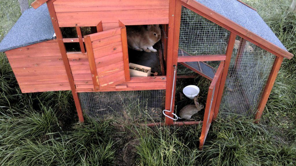 Village de Vacances avec animaux