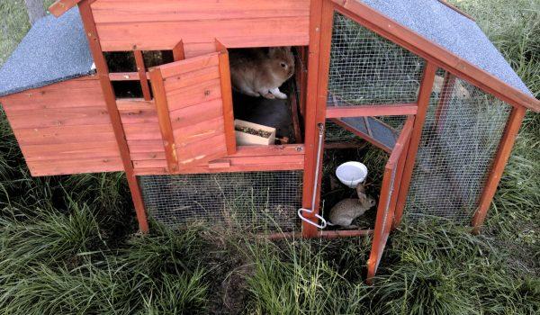 Village de Vacances Lozère : animaux acceptés