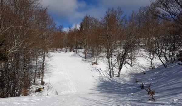 ski-mont-aigoual La chèvre